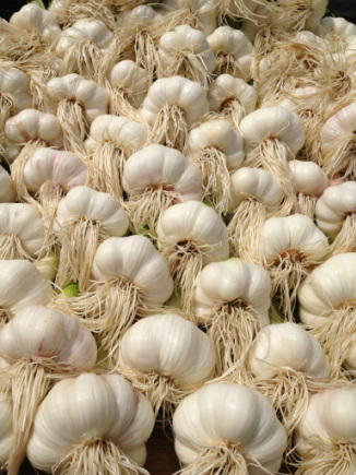 Wet Garlic at the south west garlic farm